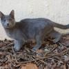 Особенный слепой котенок-инвалид ищет дом и добрых хозяев!