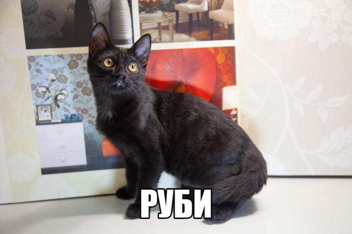 Котенок Руби